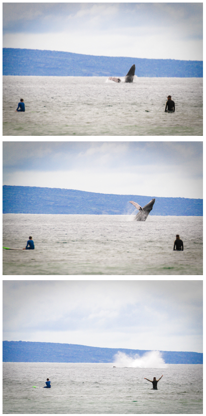 whale breach sequence photography