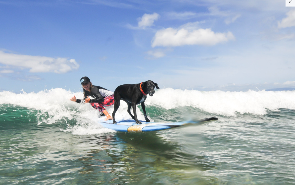 maui therapy dog surf therapy hawaii surf special needs