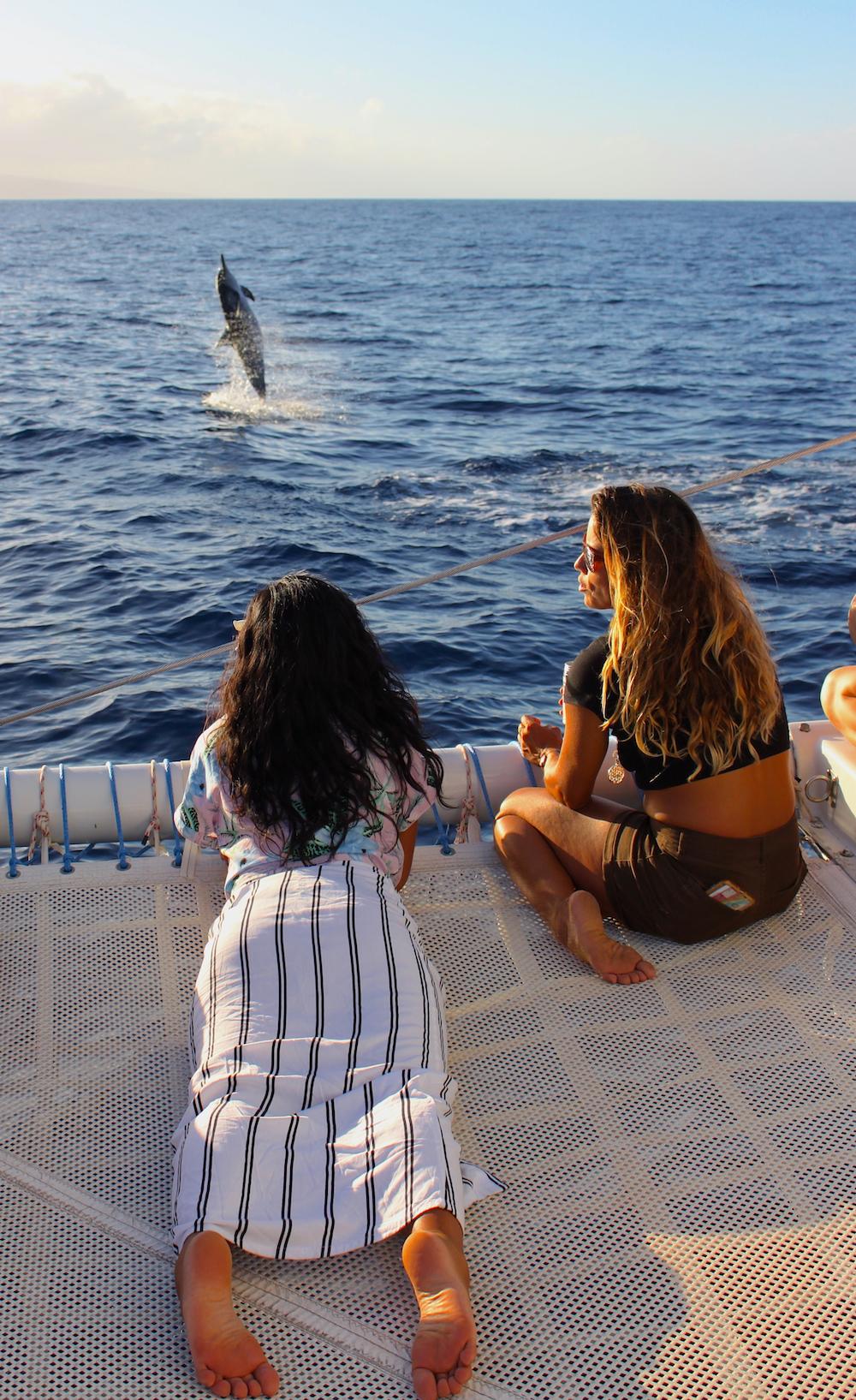 kat dolphin maui surf camp