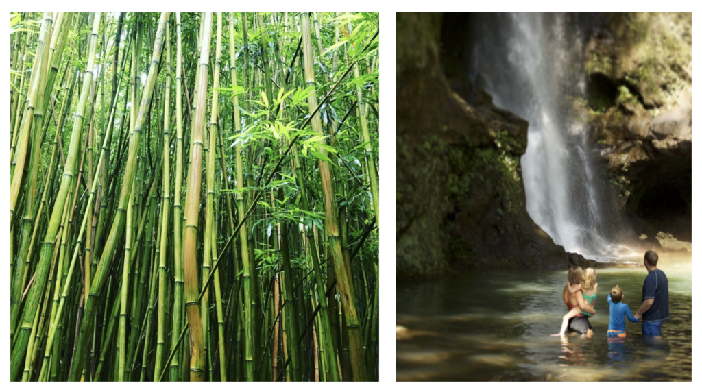 maui bamboo forest tours