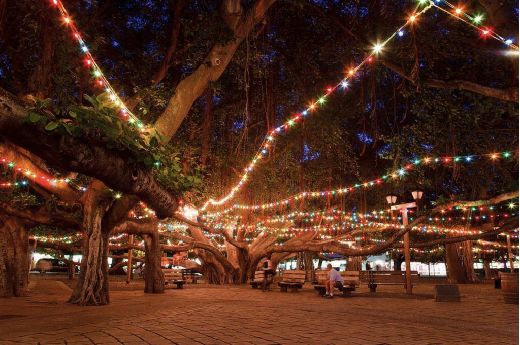 Lahaina banyan tree holiday lighting 2019